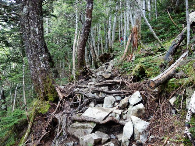 仙丈ヶ岳(北沢峠~小仙丈尾根)登山口コースガイド 岩の急登【登山口ナビ】