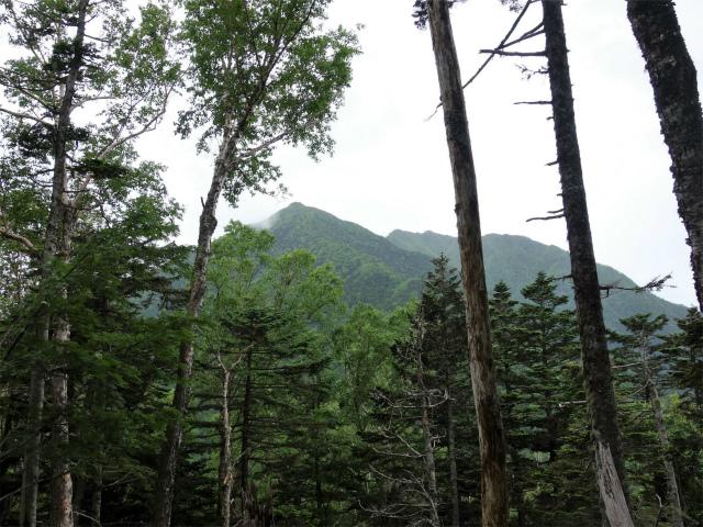 仙丈ヶ岳(北沢峠~小仙丈尾根)登山口コースガイド 北稜【登山口ナビ】