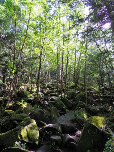 蓼科山(女乃神茶屋/すずらん峠登山口)登山口コースガイド 苔むした岩の急登【登山口ナビ】