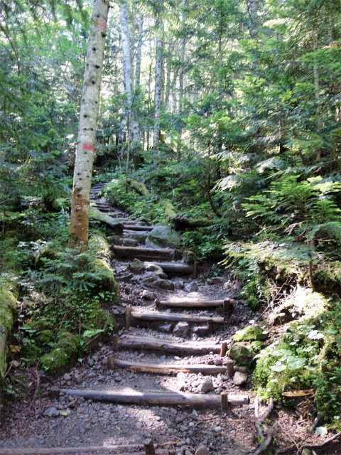 日光白根山(ロープウェイ山頂駅コース) 登山口コースガイド 階段【登山口ナビ】
