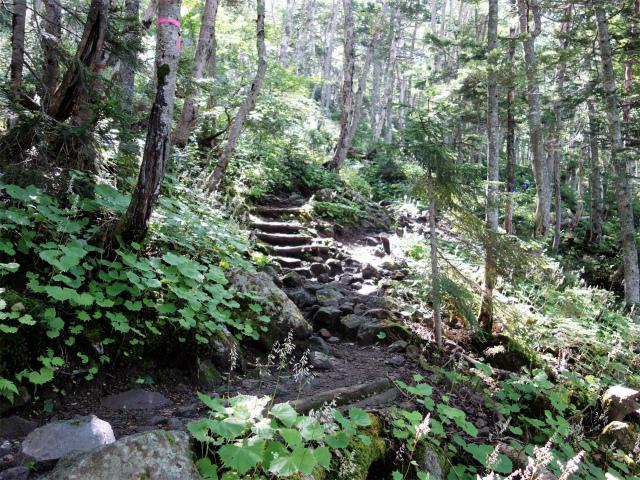 日光白根山(ロープウェイ山頂駅コース) 登山口コースガイド 深い樹林帯【登山口ナビ】