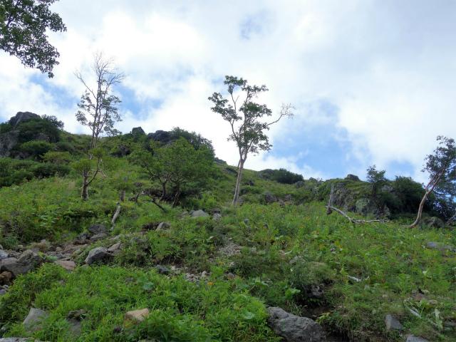 日光白根山(七色平~五色沼) 登山口コースガイド 疎林【登山口ナビ】