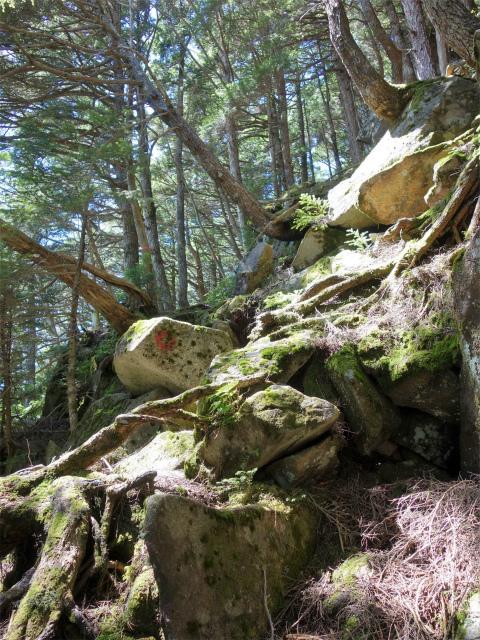 国師ヶ岳(天狗尾根) 登山口コースガイド 苔むした岩【登山口ナビ】
