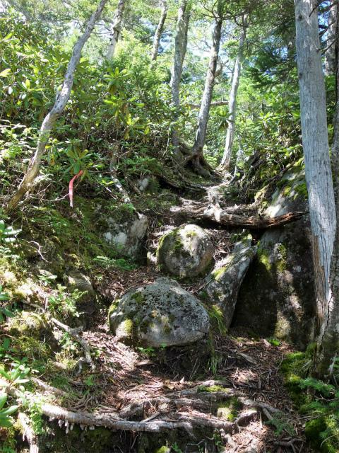 国師ヶ岳(天狗尾根) 登山口コースガイド 樹林帯の急登【登山口ナビ】