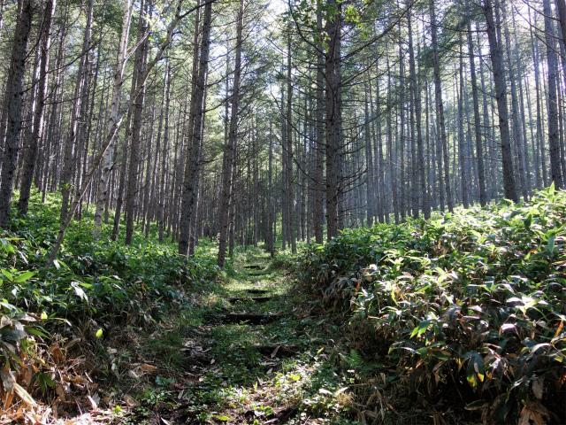 四阿山(鳥居林道口~上州古道)登山口コースガイド 植林帯【登山口ナビ】