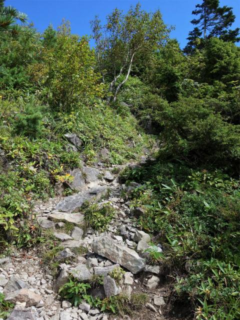 四阿山(鳥居林道口~上州古道)登山口コースガイド 手前のピーク急登【登山口ナビ】
