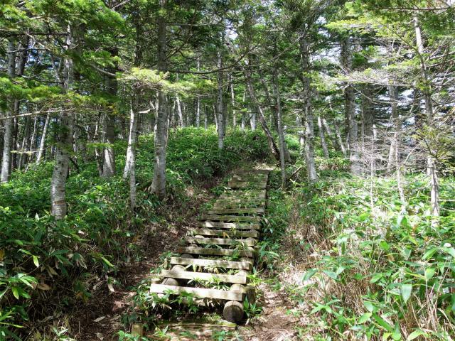 四阿山(鳥居林道口~上州古道)登山口コースガイド 階段【登山口ナビ】
