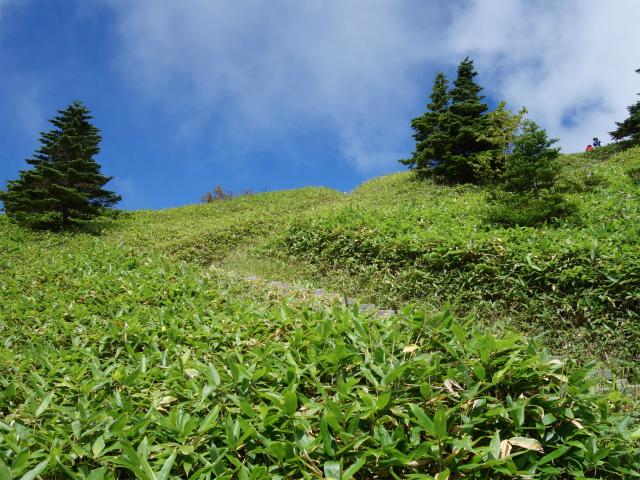 四阿山(鳥居林道口~上州古道)登山口コースガイド 山頂直下の笹原【登山口ナビ】