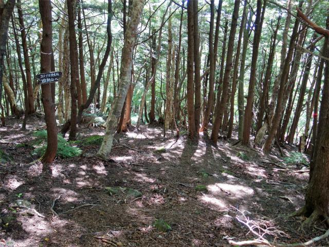 四阿山(鳥居林道口~上州古道)登山口コースガイド コメツガ原生林【登山口ナビ】
