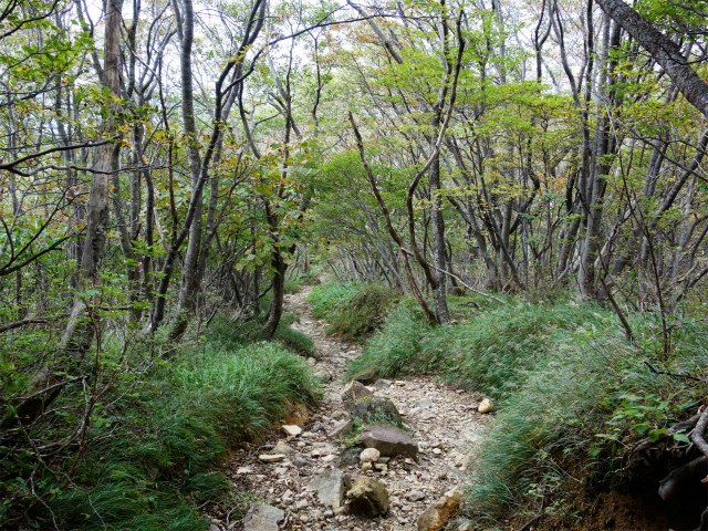 那須岳(朝日岳~姥ヶ平) 登山口コースガイド 樹林帯【登山口ナビ】