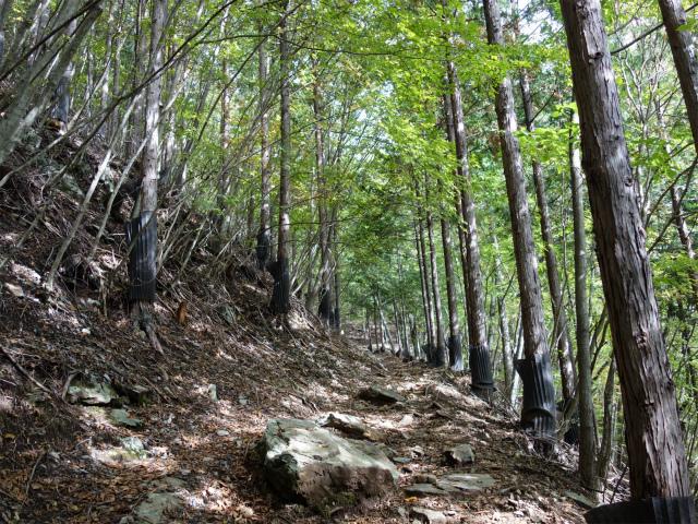 大菩薩嶺(小菅大菩薩道) 登山口コースガイド 植林帯【登山口ナビ】