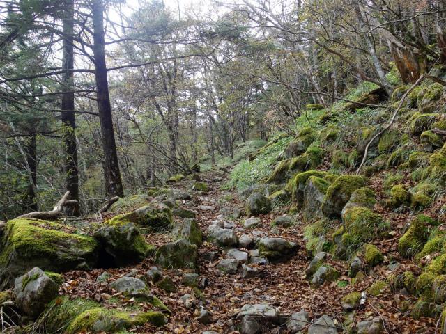 大菩薩嶺(小菅大菩薩道) 登山口コースガイド 苔むした岩【登山口ナビ】