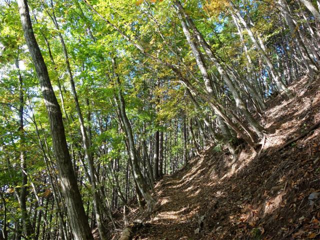 鷹ノ巣山(浅間尾根)登山口コースガイド 樹林帯【登山口ナビ】