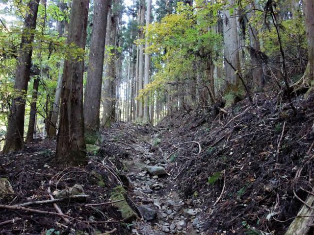 荒船山(威怒牟畿不動~艫岩~左岸コース周回)登山口コースガイド 立岩分岐【登山口ナビ】