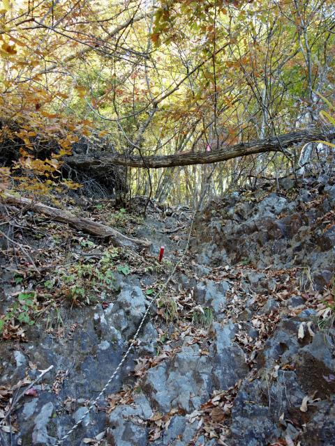 荒船山(威怒牟畿不動~艫岩~左岸コース周回)登山口コースガイド 補助ロープ【登山口ナビ】