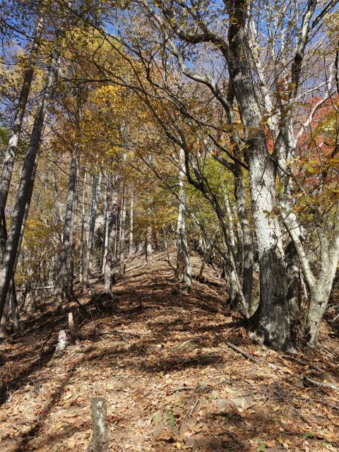 荒船山(威怒牟畿不動~艫岩~左岸コース周回)登山口コースガイド 稜線の急登【登山口ナビ】