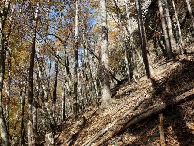 荒船山(威怒牟畿不動~艫岩~左岸コース周回)登山口コースガイド 岩峰のトラバース【登山口ナビ】