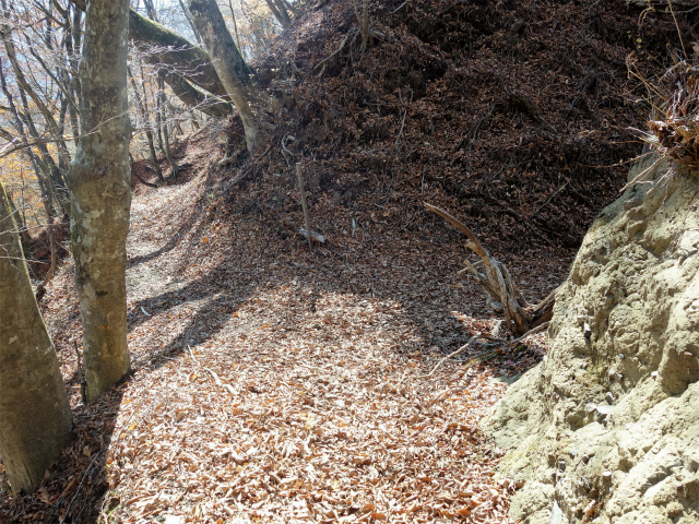 荒船山(威怒牟畿不動~艫岩~左岸コース周回)登山口コースガイド 星尾峠【登山口ナビ】