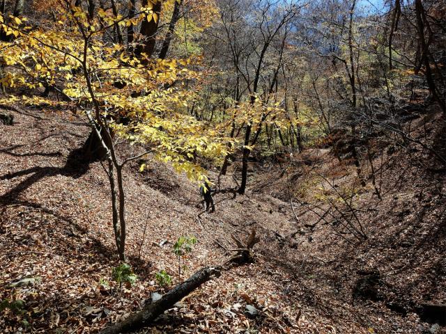 荒船山(威怒牟畿不動~艫岩~左岸コース周回)登山口コースガイド 沢筋【登山口ナビ】
