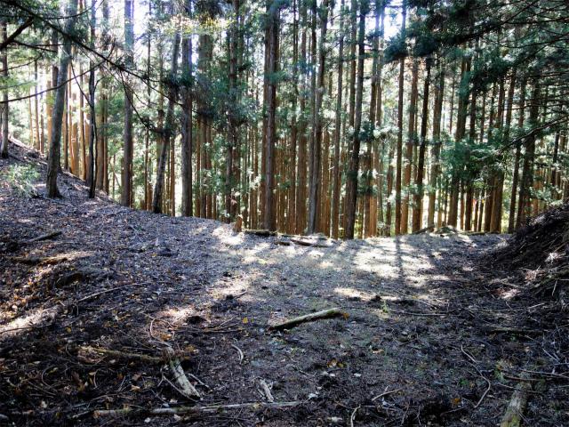 荒船山(威怒牟畿不動~艫岩~左岸コース周回)登山口コースガイド  田口峠分岐【登山口ナビ】