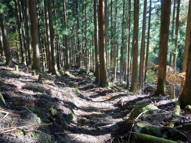 荒船山(威怒牟畿不動~艫岩~左岸コース周回)登山口コースガイド 【登山口ナビ】