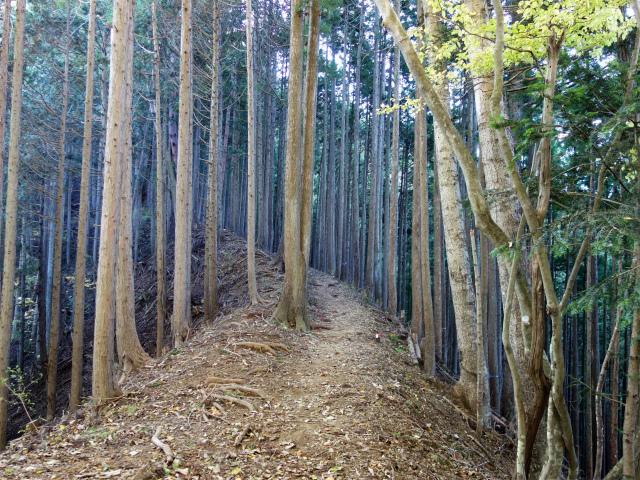 三頭山(ヌカザス尾根)登山口コースガイド 植林帯【登山口ナビ】