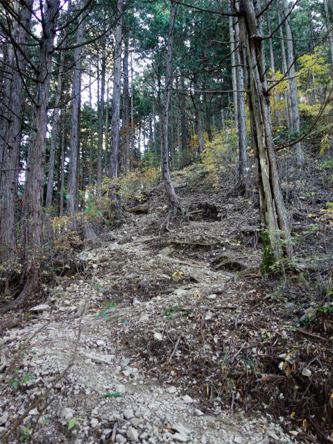 三頭山(ヌカザス尾根)登山口コースガイド ヌカザス山の急登 【登山口ナビ】