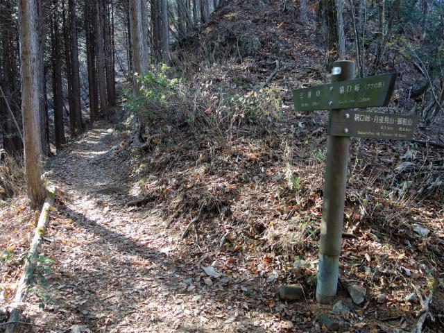 三頭山(サイグチ沢コース)登山口コースガイド ブナの路と合流【登山口ナビ】