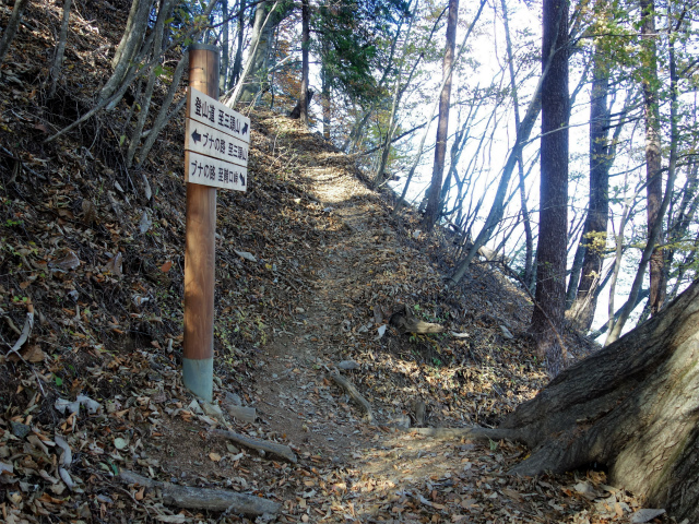 三頭山(サイグチ沢コース)登山口コースガイド ブナの路分岐【登山口ナビ】