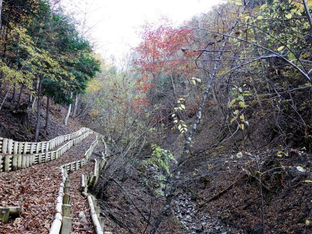 三頭山(サイグチ沢コース)登山口コースガイド 土留【登山口ナビ】