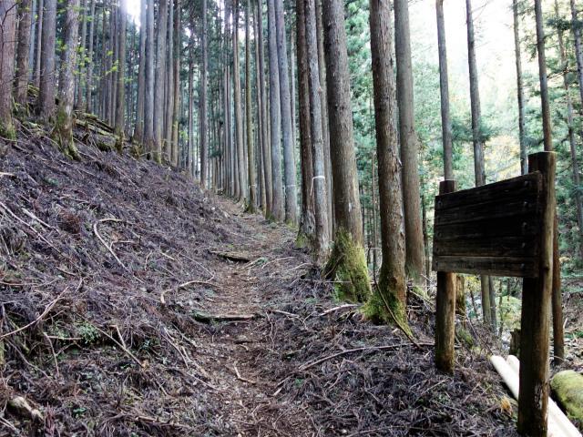 三頭山(サイグチ沢コース)登山口コースガイド 植林帯【登山口ナビ】