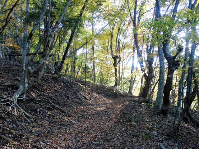 三頭山(サイグチ沢コース)登山口コースガイド 山のふるさと村ネイチャートレイル3【登山口ナビ】