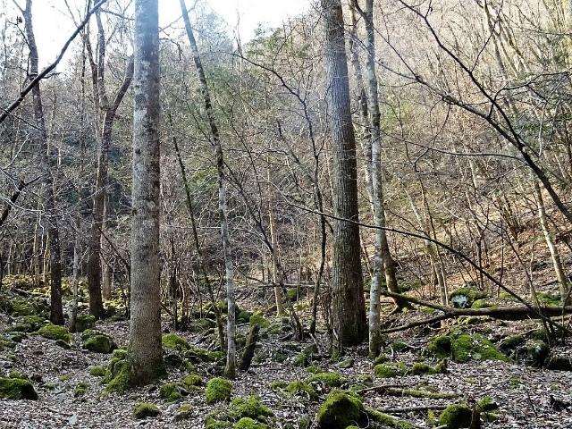 三頭山(サイグチ沢コース)登山口コースガイド【登山口ナビ】