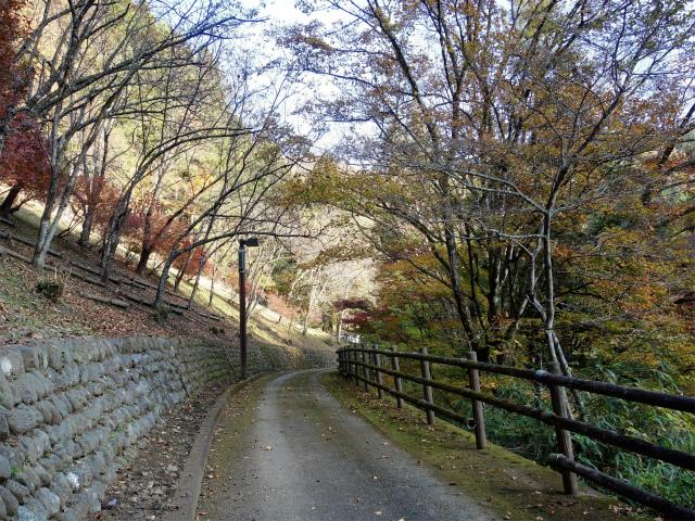 三頭山(サイグチ沢コース)登山口コースガイド 山のふるさと村徒歩道【登山口ナビ】