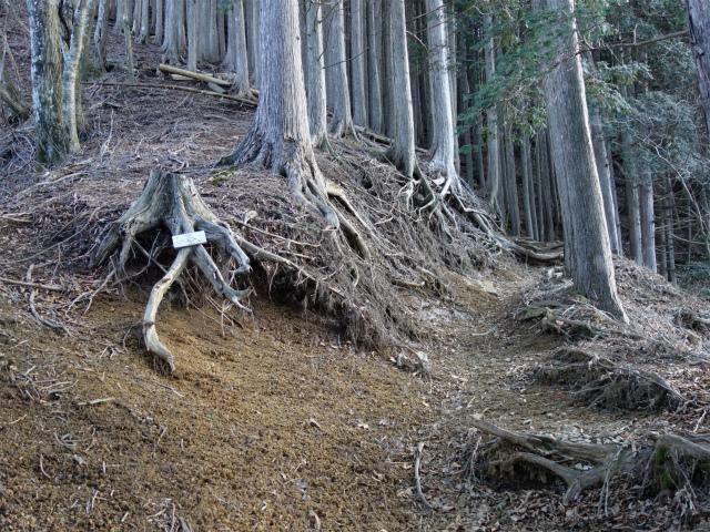 大室山(道志の湯~加入道山)登山口コースガイド 直登の踏み跡分岐【登山口ナビ】