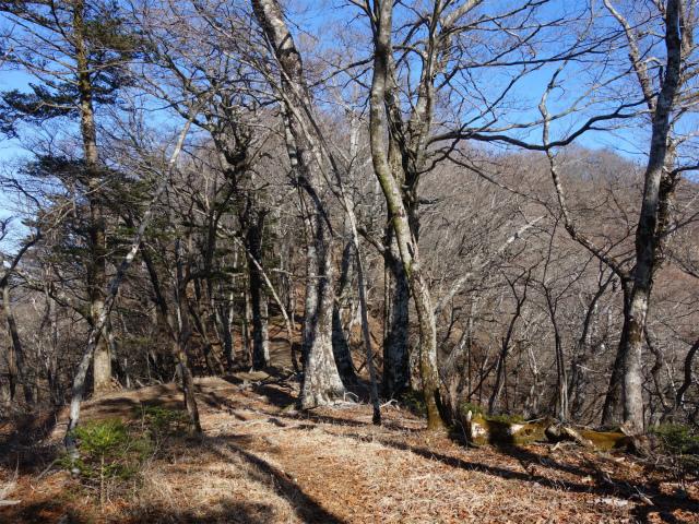大室山(道志の湯~加入道山)登山口コースガイド 稜線【登山口ナビ】