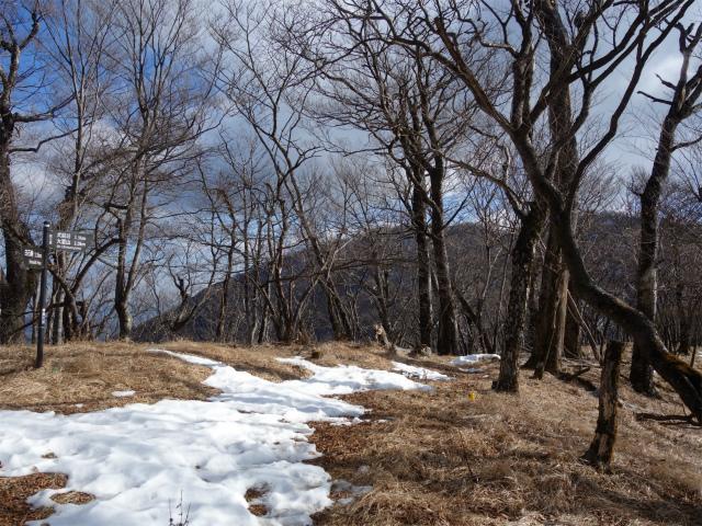 大室山(道志の湯~加入道山)登山口コースガイド 前大室山頂【登山口ナビ】