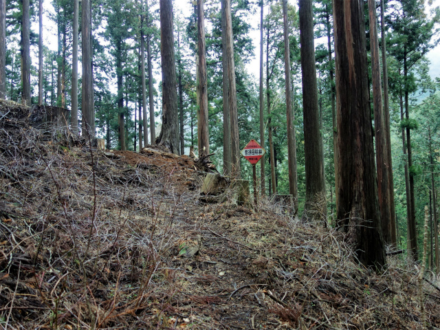 三ノ塔(BOSCO~ヨモギ平)登山口コースガイド 登山道【登山口ナビ】