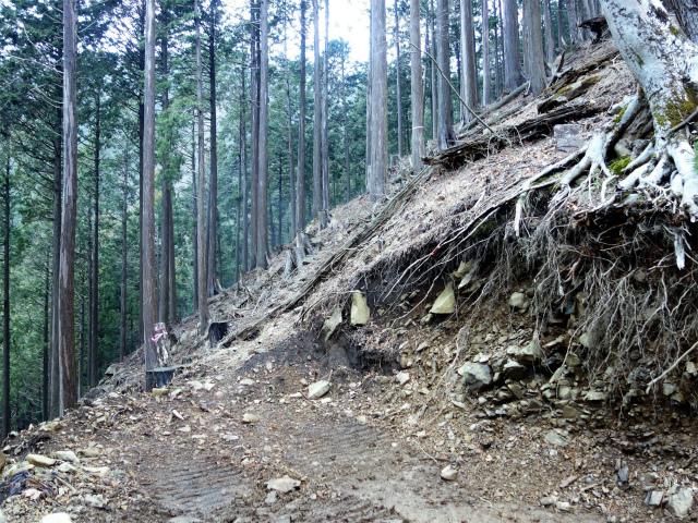 三ノ塔(BOSCO~ヨモギ平)登山口コースガイド 登山道分岐【登山口ナビ】