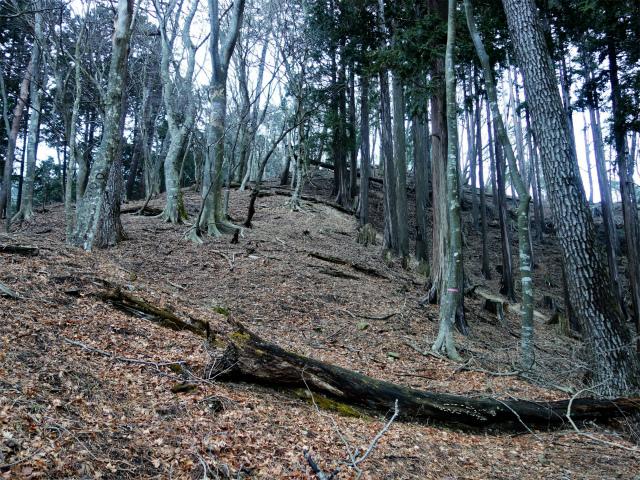 三ノ塔(BOSCO~ヨモギ平)登山口コースガイド ショートカット【登山口ナビ】