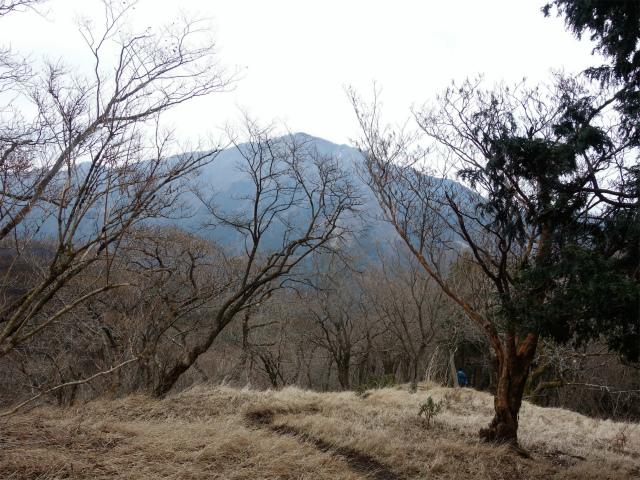 三ノ塔(BOSCO~ヨモギ平)登山口コースガイド 大山【登山口ナビ】