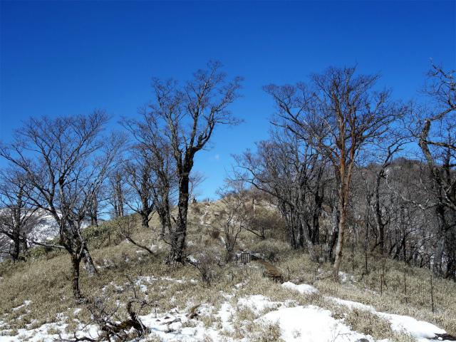 丹沢山(天神尾根~丹沢主脈)登山口コースガイド なだらかな階段【登山口ナビ】