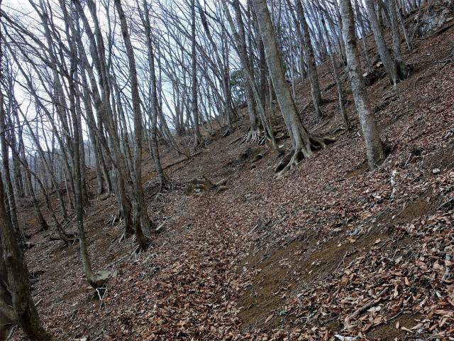 滝子山(道証地蔵~すみ沢コース)登山口コースガイド 迂回路【登山口ナビ】