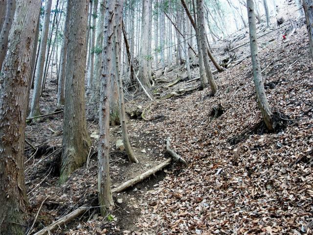 滝子山(道証地蔵~すみ沢コース)登山口コースガイド 急登【登山口ナビ】