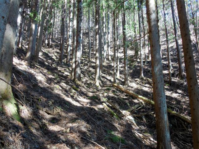 雁ヶ腹摺山(金山鉱泉~姥子山)登山口コースガイド 植林帯の急登【登山口ナビ】