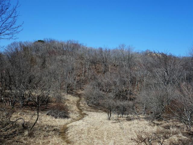 ハマイバ・大蔵高丸(道証地蔵~曲り沢峠)登山口コースガイド【登山口ナビ】