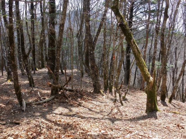 滝子山(道証地蔵~大谷ヶ丸コース)登山口コースガイド【登山口ナビ】