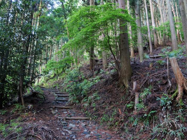 大山(日向~雷ノ峰尾根)登山口コースガイド 九十九曲の階段【登山口ナビ】