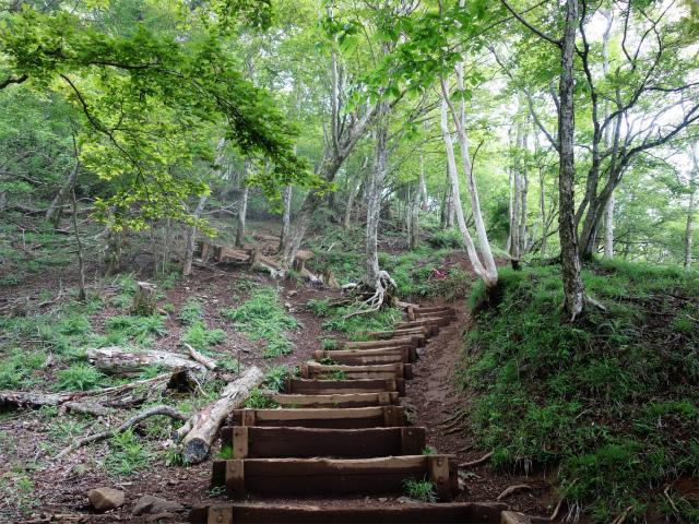大山(日向~雷ノ峰尾根)登山口コースガイド 階段の急登【登山口ナビ】
