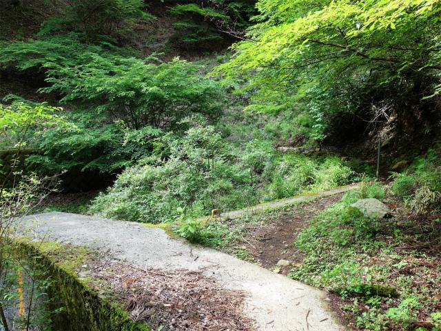 大山(日向~雷ノ峰尾根)登山口コースガイド 堰堤【登山口ナビ】